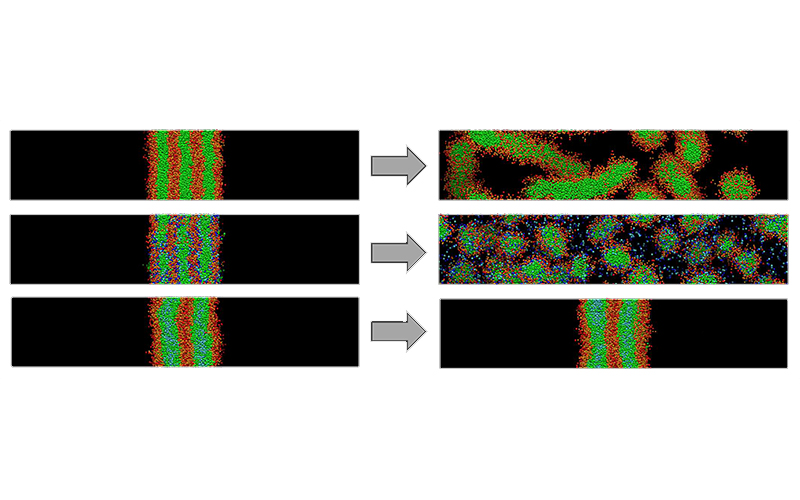 Dissipative Particle Dynamics simulation of dissolution of lamellar phases in water.